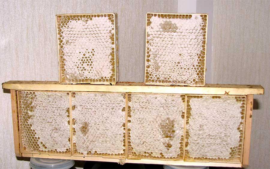 Рамка для сотового меда своими руками 257